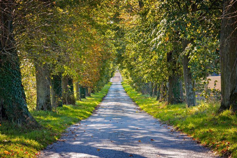 pflanzlicher Hustenlöser Spaziergang